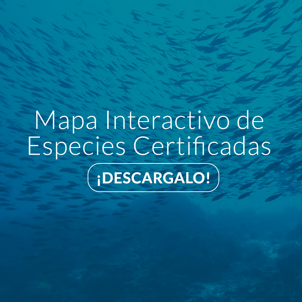 Imagem-Descarga-Mapa-Inteactivo