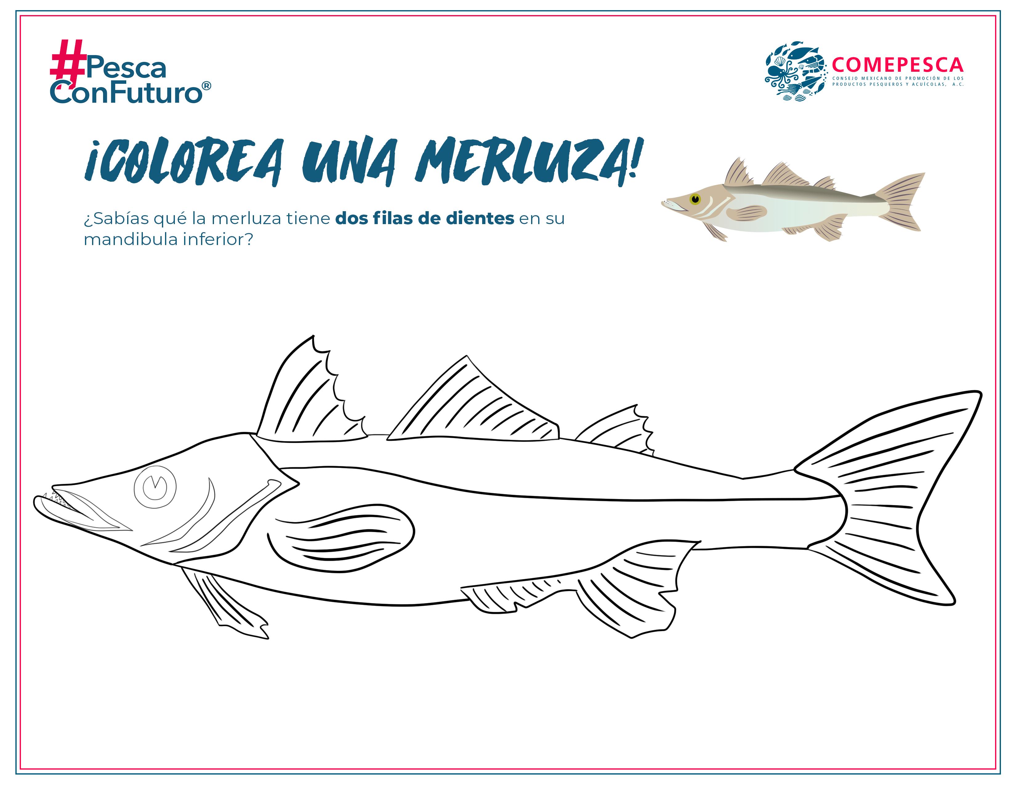 coloreaMerluza