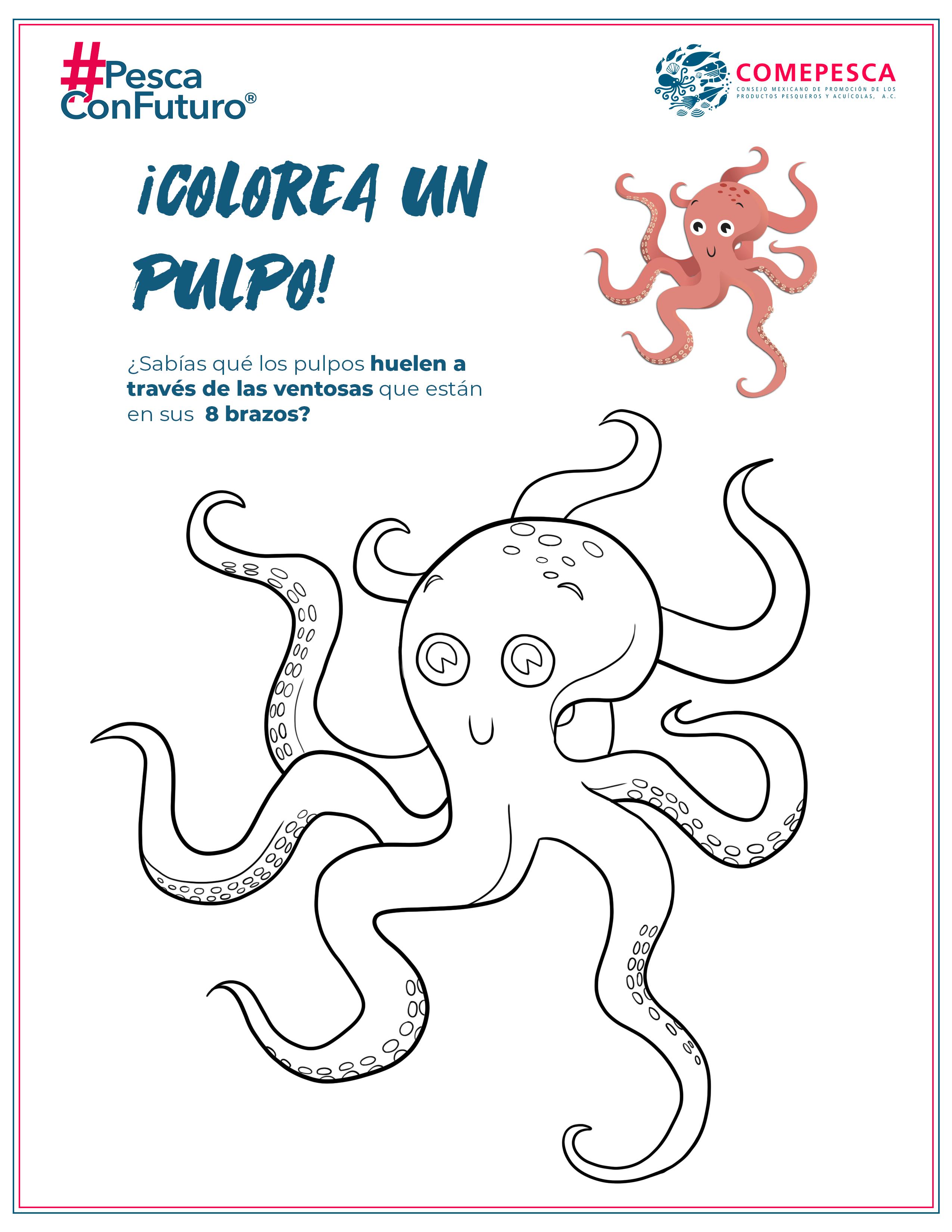 coloreaPulpo